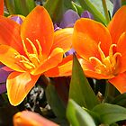 Orange Lillies by VixenFirepaw