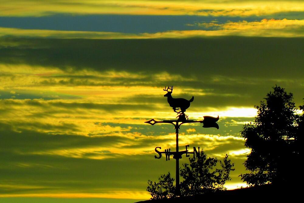 Weathervane Sunset by Debbie Robbins