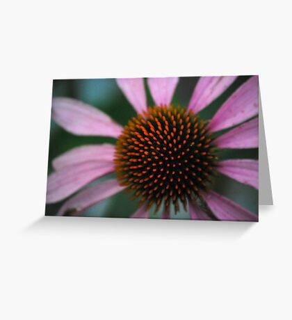 Spike Me Up With Echinacea Greeting Card