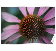 Spike Me Up With Echinacea Poster