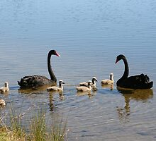 The Swan Family by Robyn Williams