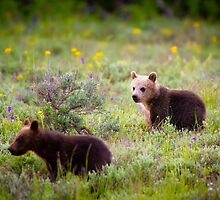 Grizzly Bear #399's Cubs by cavaroc