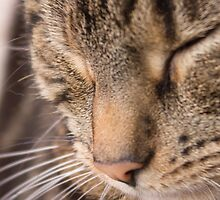 Sleeping Tabby Cat by mariesym