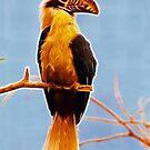 Watch The Birdie ! by dunawori