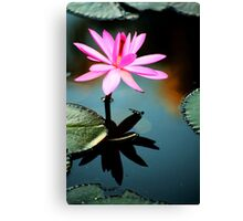Pink - waterlilly Canvas Print