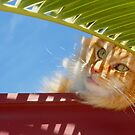 """Sungah"" Rooftop Relaxin........... by Toni Kane"