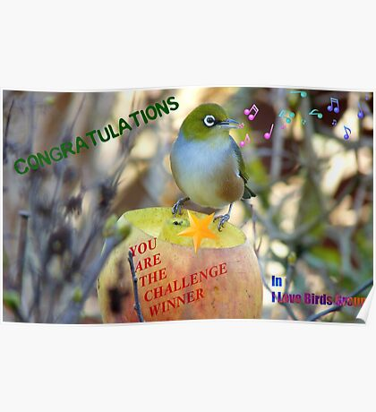 Challenge Winner Banner - I love birds group Poster