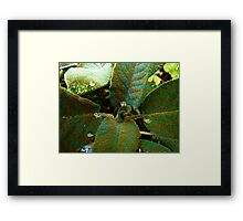 Sage with a twist Framed Print