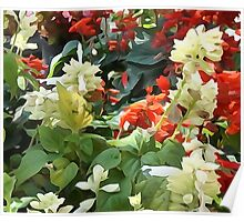 Blooms Of Red And White Poster