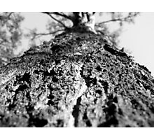 Iron Bark Photographic Print