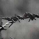 Barbed Wire by Jason Scott