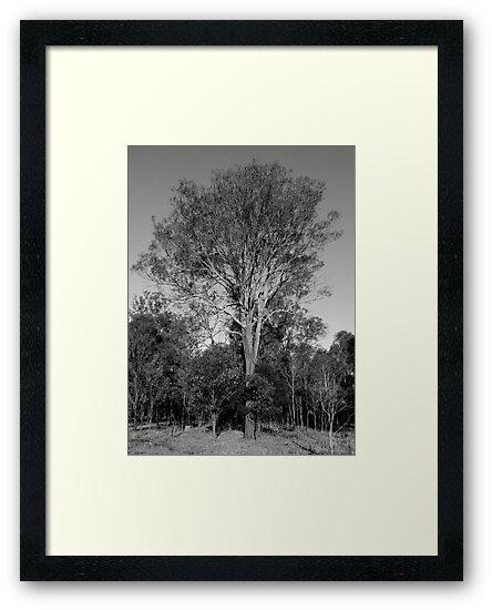 Grand Pa by Mark Batten-O'Donohoe