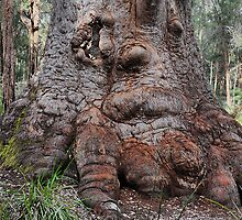 Grandma Tingle - Ancient Empire WA by Bev Woodman