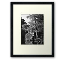 Cypress Reflections Black and White Framed Print