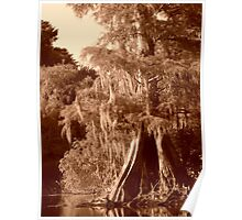 Sepia Cypress Reflections Poster