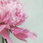 floral still lifes by Iris Lehnhardt