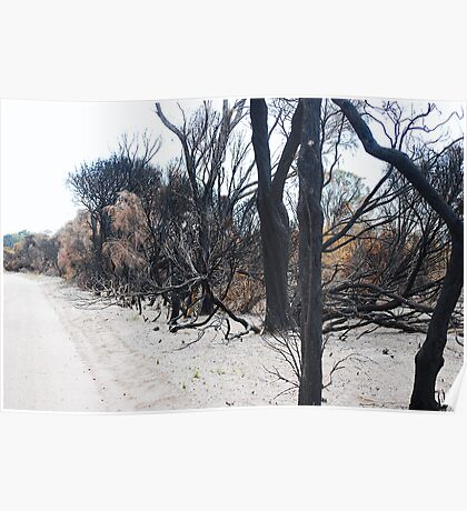 Aftermath of a Bush Fire Poster