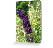 Purple and Orange Flowers, North Carolina Greeting Card