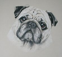 Pip, Pug Portrait by Stephanie Greaves