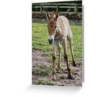 Baby Przewalski's Horse Greeting Card
