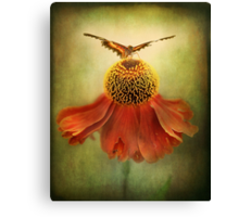 Butterfly on dancing Coneflower.. Canvas Print