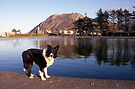 Indy at the boating pond by Michael Haslam