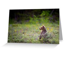 Grizzly Bear Cub Standing Greeting Card