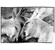 Sleeping Kangaroo's Poster