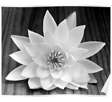 Water Lily on Wood Poster