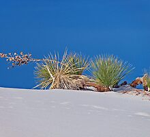 Sideways, White Sands National Monument by Maggie Woods