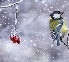 Great Tit Winter Holiday Card - Greeting Card by Moonlake
