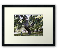 Crooked Tree Framed Print