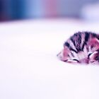 Tiny Sleeping Kitten by rafolio
