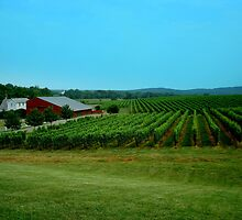 Barboursville Vineyards - Smalltown USA Series   ^ by ctheworld