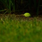 Lawn tennis by Themis