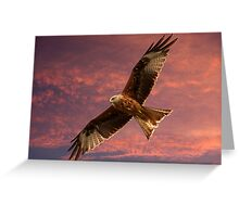 Red Kite at Night, Shepherds Delight Greeting Card