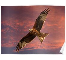 Red Kite at Night, Shepherds Delight Poster