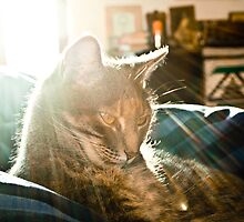 Lounging in the Winter Sun by Margo Naude