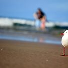 Seagull in Focus by Carol James