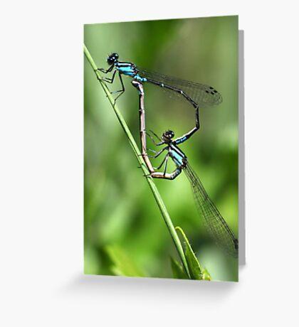 Bluets Mating Game Greeting Card