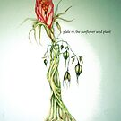 The Sun Seed Flower by Helena Wilsen - Saunders