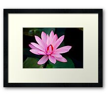 Show Off - pink waterlilly Framed Print