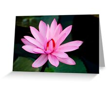 Show Off - pink waterlilly Greeting Card