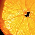 Orange Slice by Phillip M. Burrow