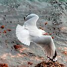 the seagull by ralphyboy