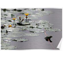 Frogs Life - Danube Delta, Romania Poster