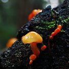 Mushrooms by ToddDuvall
