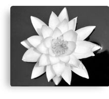Lily Floating Canvas Print