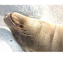Galapagos Sea Lion Photographic Print