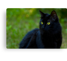 Black Beauty - Skippy outdoors Canvas Print